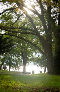 十和田湖畔の写真素材 [FYI00287678]