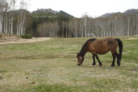 木曽馬の素材 [FYI00287893]