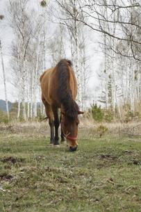 木曽馬の素材 [FYI00287901]