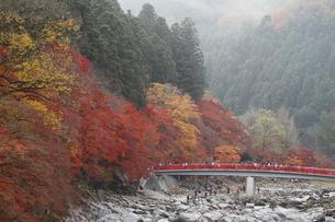 香嵐渓の紅葉の写真素材 [FYI00287912]