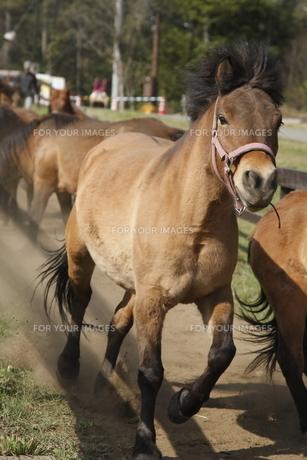 駆ける馬の素材 [FYI00287918]