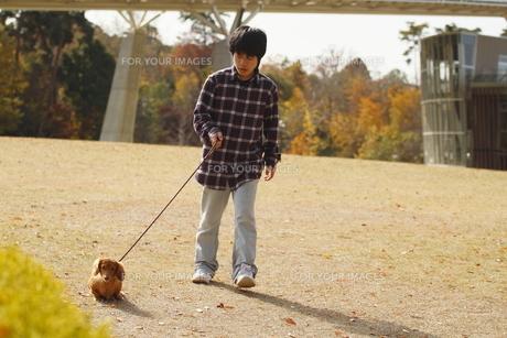 犬の散歩の写真素材 [FYI00287929]