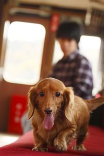 愛犬の写真素材 [FYI00288084]
