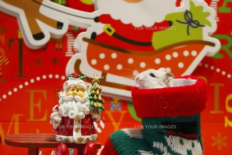 ハムスターのクリスマスの写真素材 [FYI00288091]