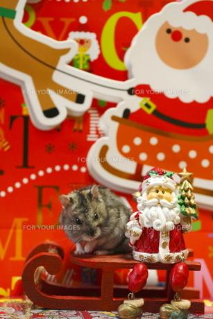 ハムスターのクリスマスの写真素材 [FYI00288093]