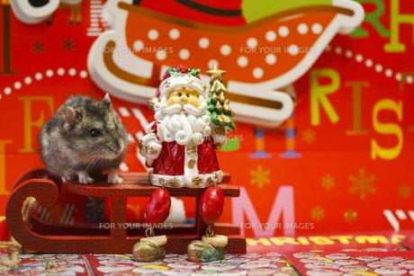 ハムスターのクリスマスの写真素材 [FYI00288095]