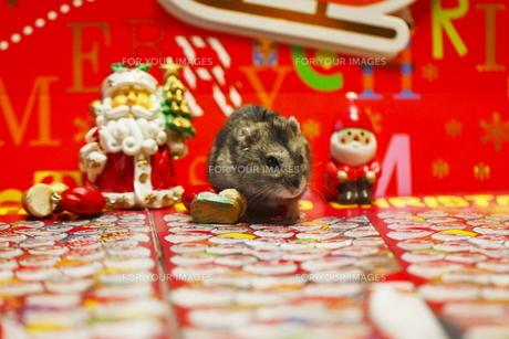 ハムスターのクリスマスの写真素材 [FYI00288122]