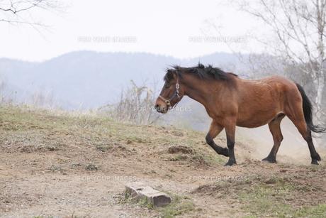木曽馬の素材 [FYI00288195]