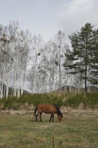 開田高原の馬の素材 [FYI00288230]
