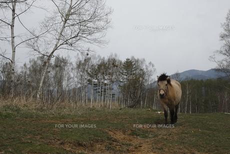 木曽馬の素材 [FYI00288240]
