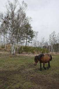 木曽馬の素材 [FYI00288241]