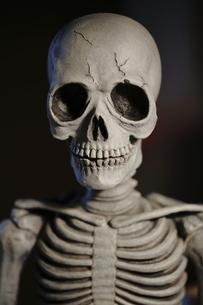 骸骨の写真素材 [FYI00288321]