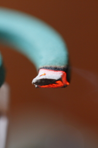 蚊取り線香の写真素材 [FYI00288376]