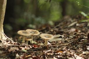 茸の森の写真素材 [FYI00288439]