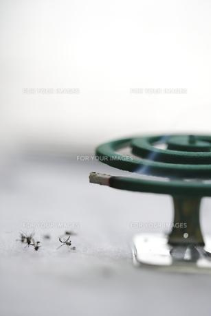 蚊取り線香の写真素材 [FYI00288476]