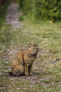 野良猫の写真素材 [FYI00288555]