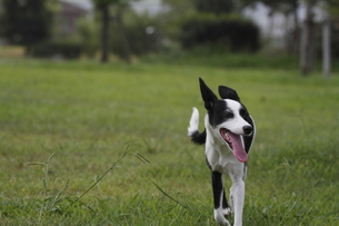 雑種犬の写真素材 [FYI00288587]