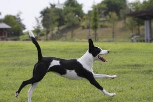 公園を散歩する犬の写真素材 [FYI00288601]