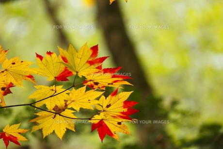 日本の秋の素材 [FYI00288800]