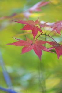秋 紅葉の写真素材 [FYI00288840]