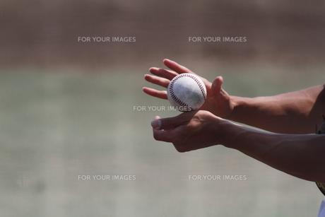 野球硬式ボールの写真素材 [FYI00289157]