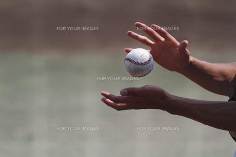 野球硬式ボールの写真素材 [FYI00289176]