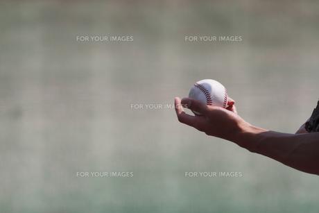 野球硬式ボールの写真素材 [FYI00289178]