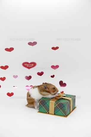 バレンタインハムスターの写真素材 [FYI00289398]