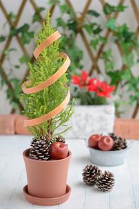 ゴールドクレストのクリスマスツリーの写真素材 [FYI00289693]