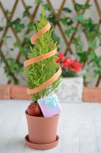 ゴールドクレストのクリスマスツリーの写真素材 [FYI00289696]