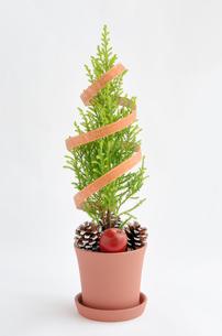 ゴールドクレストのクリスマスツリーの写真素材 [FYI00289704]