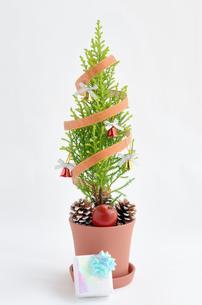 ゴールドクレストのクリスマスツリーの写真素材 [FYI00289706]