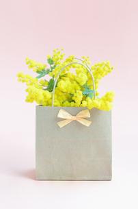 ミモザの花の写真素材 [FYI00289718]