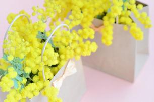 ミモザの花の写真素材 [FYI00289724]