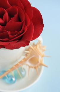 赤いバラと巻き貝の写真素材 [FYI00289733]
