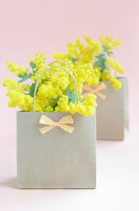 ミモザの花の写真素材 [FYI00289739]