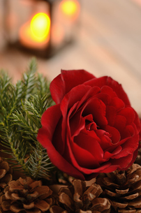薔薇のアレンジメントとランタンの明かりの写真素材 [FYI00289760]