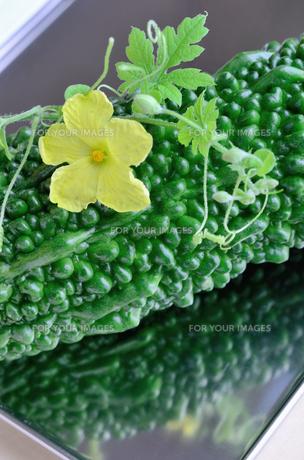 ゴーヤの花と実の写真素材 [FYI00289810]