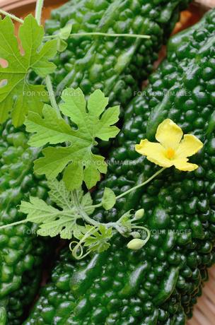 ゴーヤの花と実の写真素材 [FYI00289818]