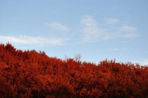 紅葉した山の写真素材 [FYI00289823]