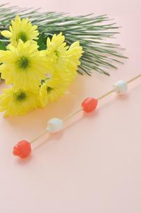 菊と松と餅花の写真素材 [FYI00289852]