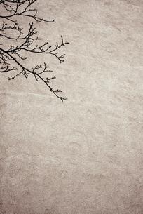 枝の素材 [FYI00290078]
