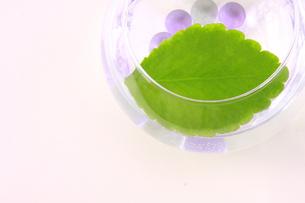 ガラスの花器に入ったビー玉とマザーリーフの写真素材 [FYI00290124]