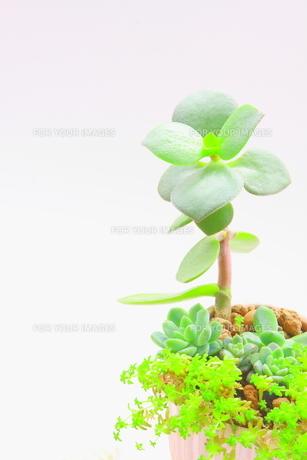 多肉植物の寄せ植えの写真素材 [FYI00290140]