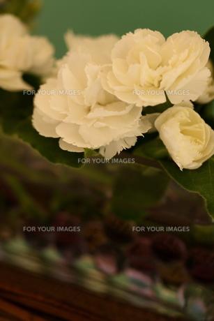 白いカーネーションとビー玉の入った花瓶の素材 [FYI00290159]