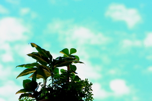 植物と青空の写真素材 [FYI00290166]