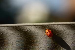 人面虫の写真素材 [FYI00290172]