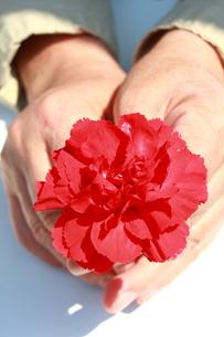 花を持つ手の写真素材 [FYI00290178]