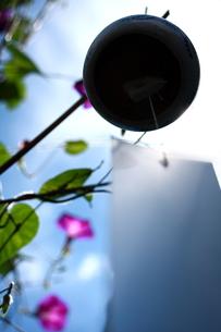 風鈴とアサガオの写真素材 [FYI00290188]