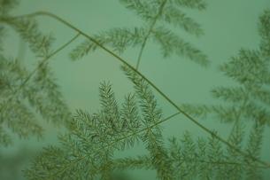 葉の写真素材 [FYI00290192]